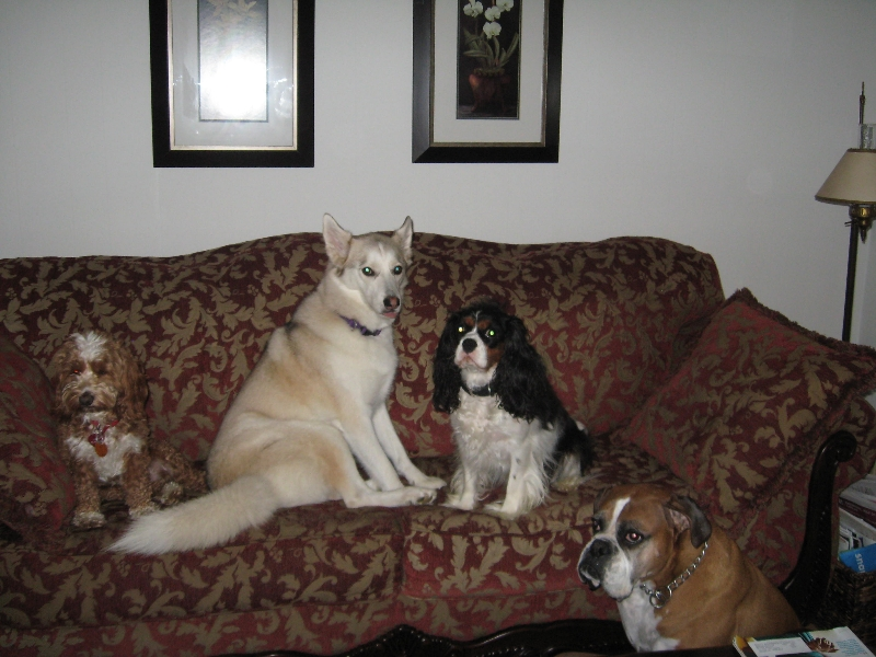 Angel, Misty, Nicky, Rocco