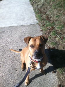 Sage poses for the camera during her morning walk.