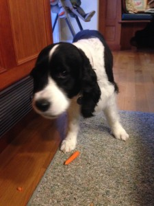 Nellie enjoys eating her carrot!