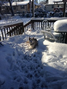 Misty enjoys the snow before a real path is cleared!