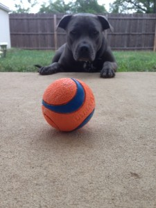 It's me, Brixton with my ball!