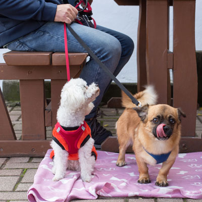 dogs at Willow Grove outdoor dining